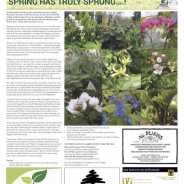 """Spring has truly sprung"" – Moorlander April 2019"