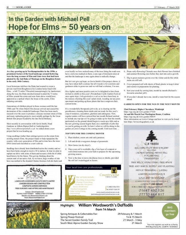 Hope for Elms 50 years on - Moorlander 200221