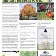 Toffee apple trees & Celery soup – Moorlander October 2020
